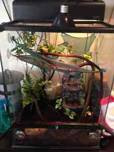Chameleon Terrarium Full Kit
