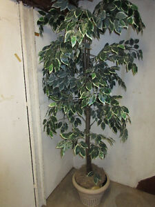 7 ft  Artificial tree with pot.