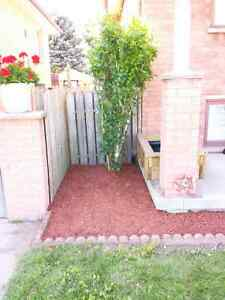 Lawncare and landscaping London Ontario image 1