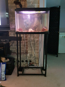 20g tank on metal stand