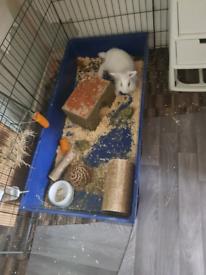 Rabbit cage set up