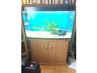 Aqua One 980t Aquarium