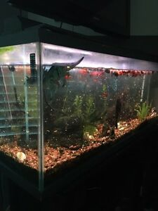 Big aquarium with everything!  fishtank 55 Gallons!