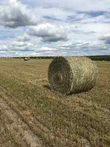 Good large round bales for sale