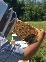 intro Bee keeping course