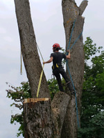 Professional TREE CUTTING & REMOVAL SERVICES