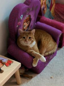 Missing Cat  (Orange Tabby)                  Osmond Appleton Rd.