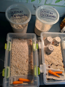 Selling mealworms, beetles, and worm bedding.