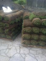 NEED A NEW LAWN?!?!? Best price on Sod installation in the area!