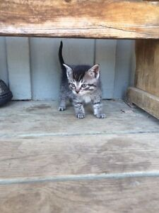 Kitten free to a good home