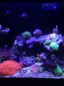 Red Sea 130D with upgrades