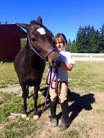 Beginner and intermediate basic English riding lessons!!!