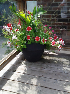 ****VARIOUS GARDEN PLANTERS AND PLANTS****