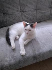 White and black female cat