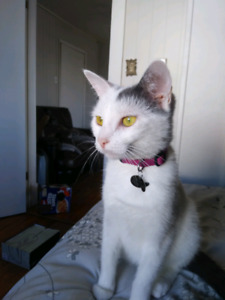 Free 1 Year Old Female Cat