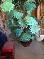 3 artificial trees pots and rock included