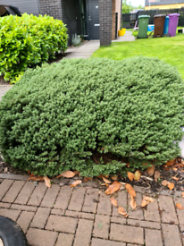 Garden bush