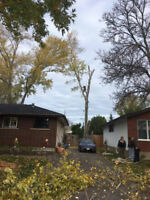Tree removal, Tree pruning, Drone recovery, Spring clean up