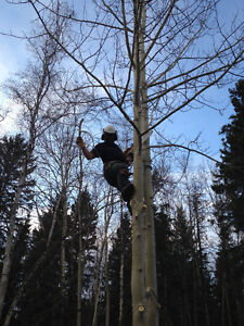 Tree removal and pruning Prince George British Columbia image 1