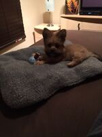 Little Puppy needs to be Rehomed