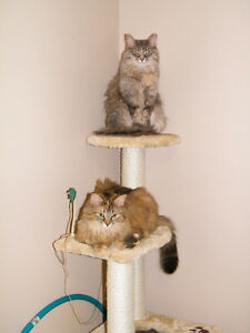 FREE! Sydney & Sadie Cats Need a Loving Family with NO DOGS!