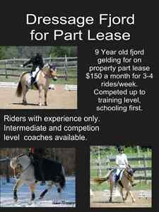 Dressage horse for lease