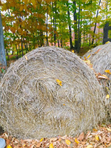 Foin a vendre-Hay for sale