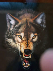 """24"""" X 34"""" picture of prowling wolf."""