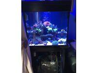 Black Aqua one 275 marine tropical fish tank aquarium with setup