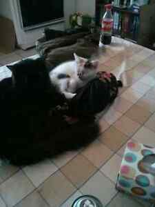 Chat et chaton errant montreal