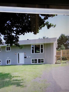 Spacious 4 or 6 Bedroom house Avail. Aug. 1st