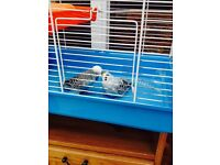 Budgie and cage for sale