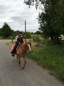Actively looking for a part board or lease for my 2 mares Peterborough Peterborough Area image 4
