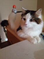 Mike needs a home!! 3 yr old, neutered cat.
