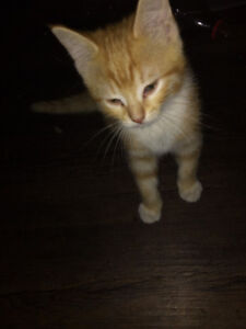 5 kittens need good home