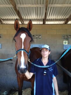 Stable Hand Wyong Wyong Area Preview