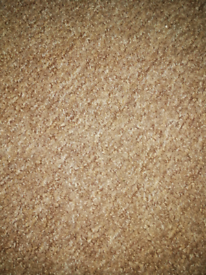Brown carpet 13' x 9'