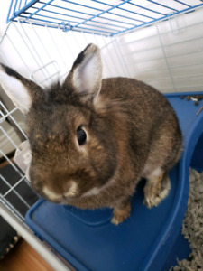 Bunny looking for a home