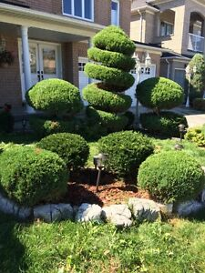 Landscaping Lawn Maintenance