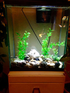 20 gallon aquarium with fish, filter, acessories and stand