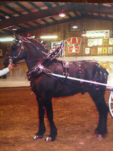 Draft Horse Show Harness (double)