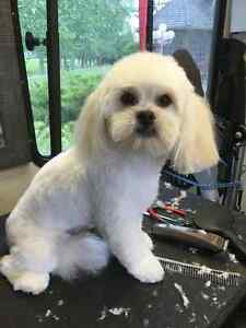 Mobile Dog Grooming Regina Regina Area image 5