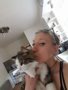West Island Cats - The best Cat Sitters Around!