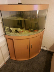 Jewel trigon fish tank with fluval 350 pump