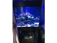 Black Aqua one 275 marine tropical fish tank aquarium with setup
