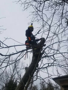 Affordable Tree Service-Tree Removal-Storm damage repair