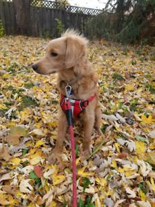 Dog Walker/Pet Sitter - Square One Area - Pups 'n' Kittens