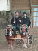Miniature Pony Driving Lessons