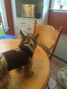 Crochet hooded sweaters for small dog or puppy