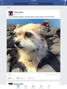 Wire haired Terrier - name: Lady has been found